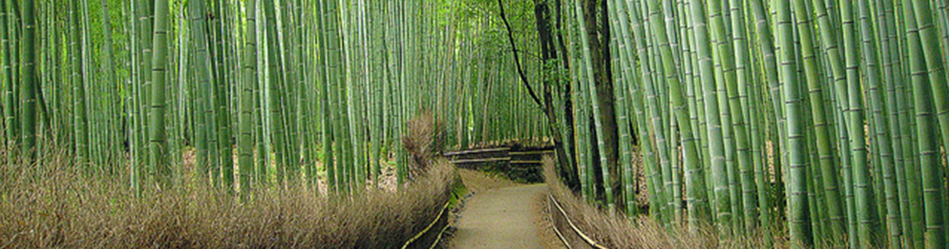 竹のはなし| 京都・嵐山 いしか...